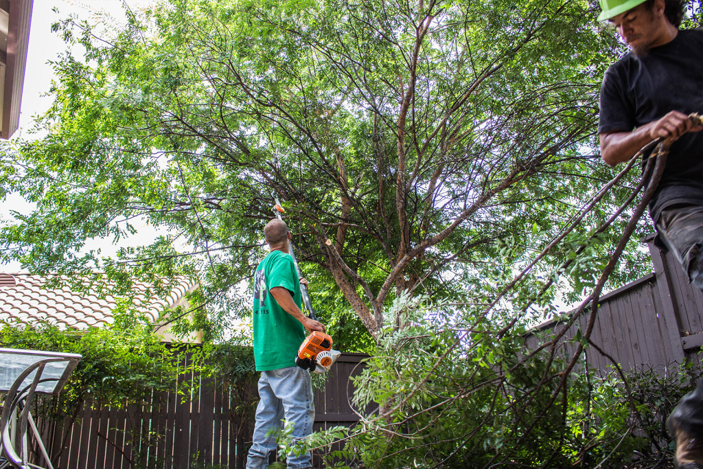 Arborist El Dorado Hills - in Action
